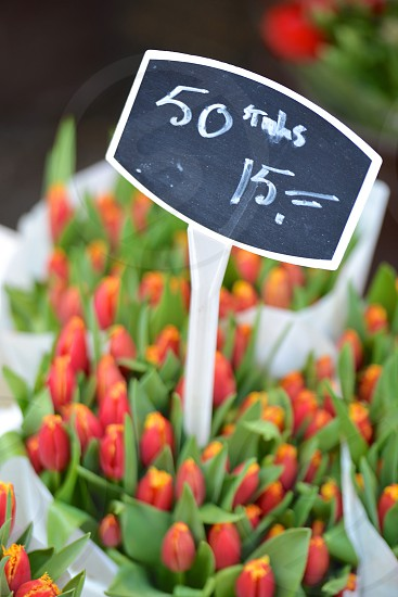 Flowers for Sale photo