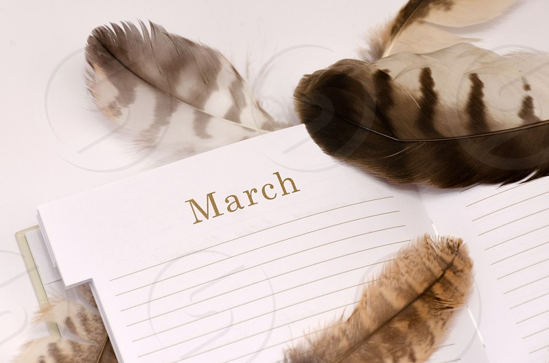 List of business diary with scattered feathers photo