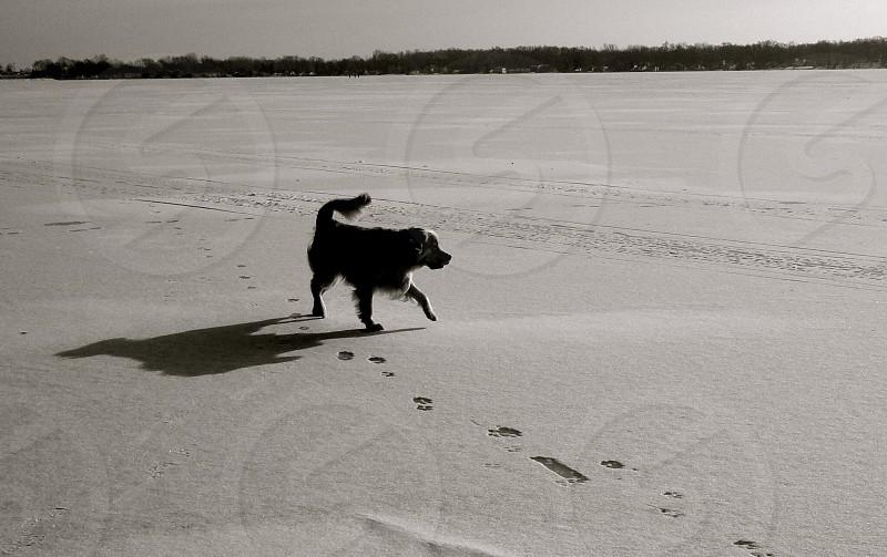 dog walking on sand photo