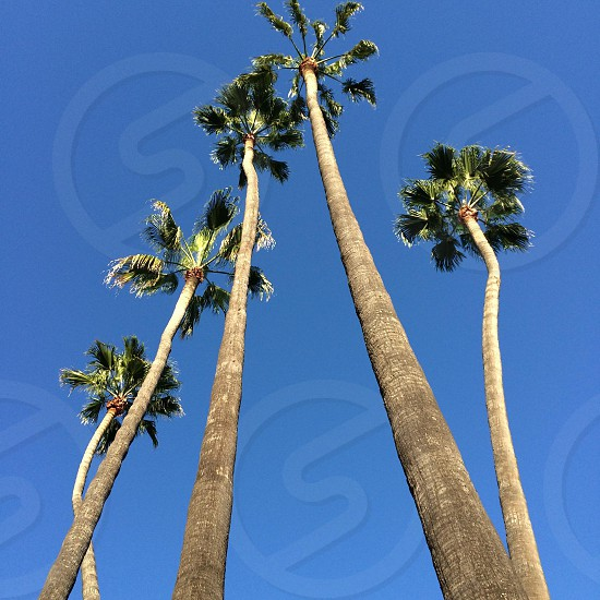 Palms in a pyramid  photo