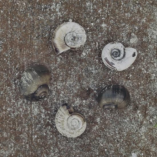 white shells photo