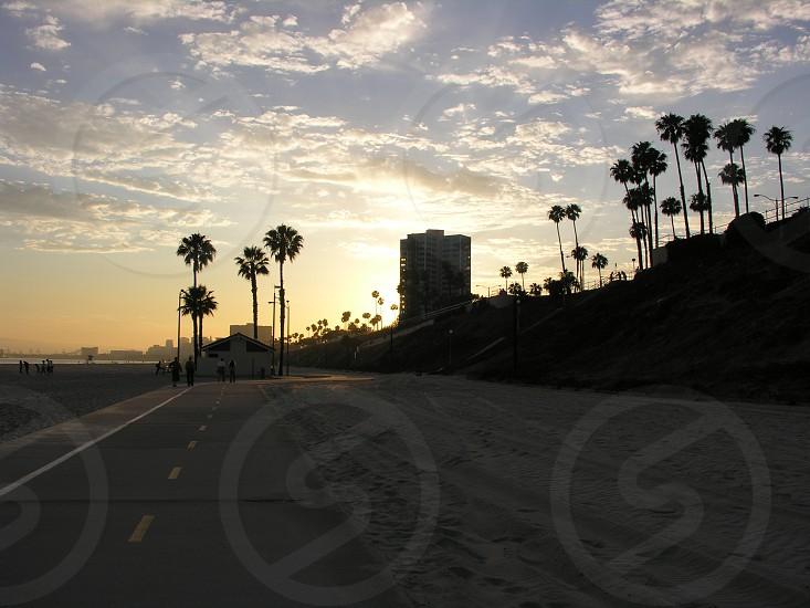 long beach shadow sunset palm trees bike path photo