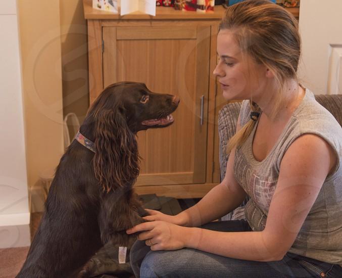 working spaniel on back legsdoglookingowner photo
