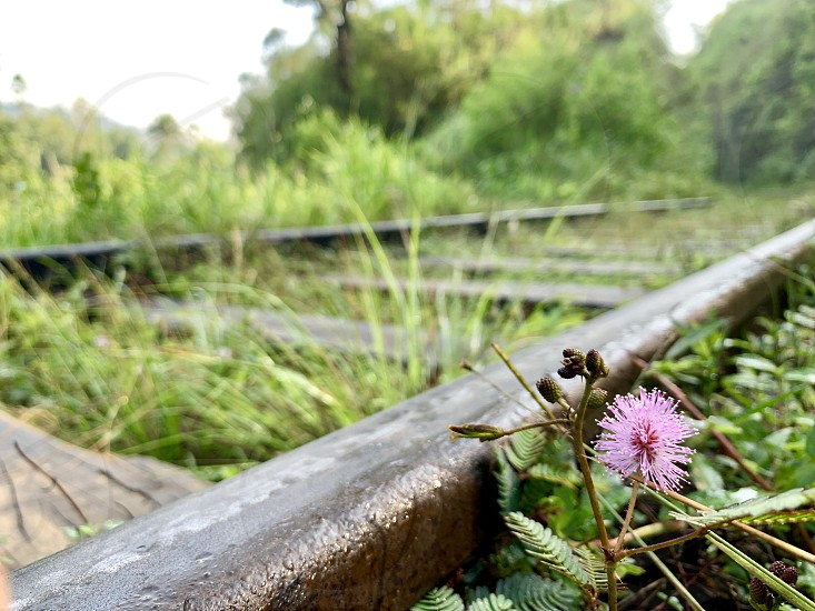 flower blossom train railway spring wet grass green tropical rail  photo