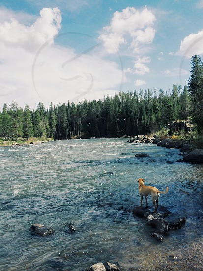 National forest Rocky Mountains river photo