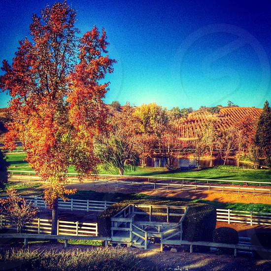 country side with white fences and autumn leafed tree photo