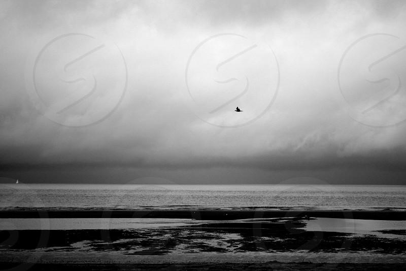 Storm bird photo