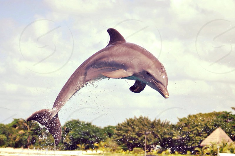 gray dolphin mammal photo photo