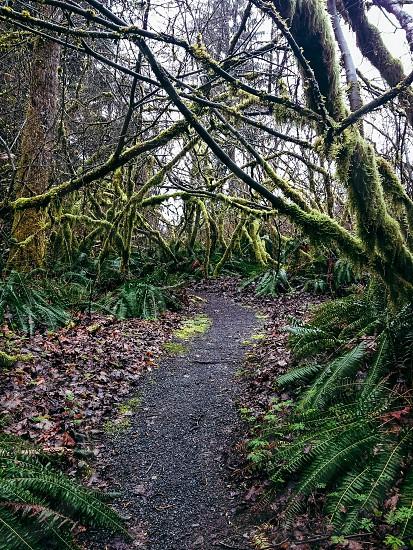 Path trees moss fall leaves photo