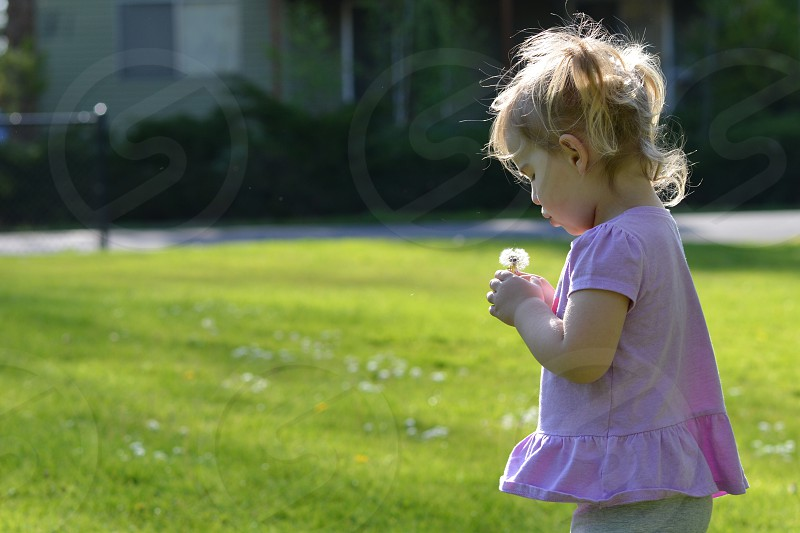 Toddler child girl dandelion spring photo