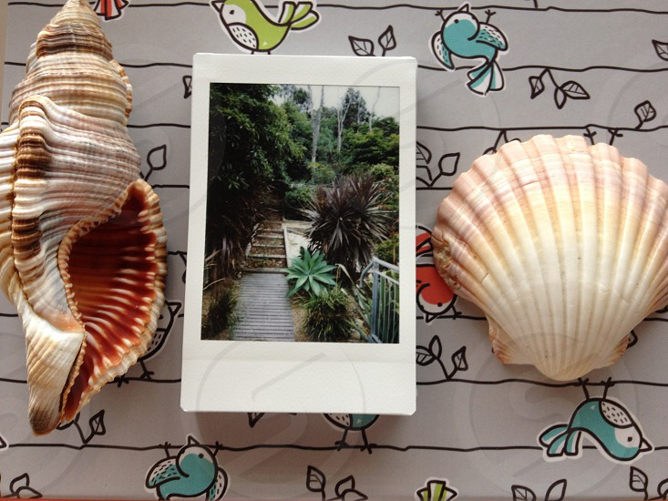 Instax photo between two seashells on a decorated box photo