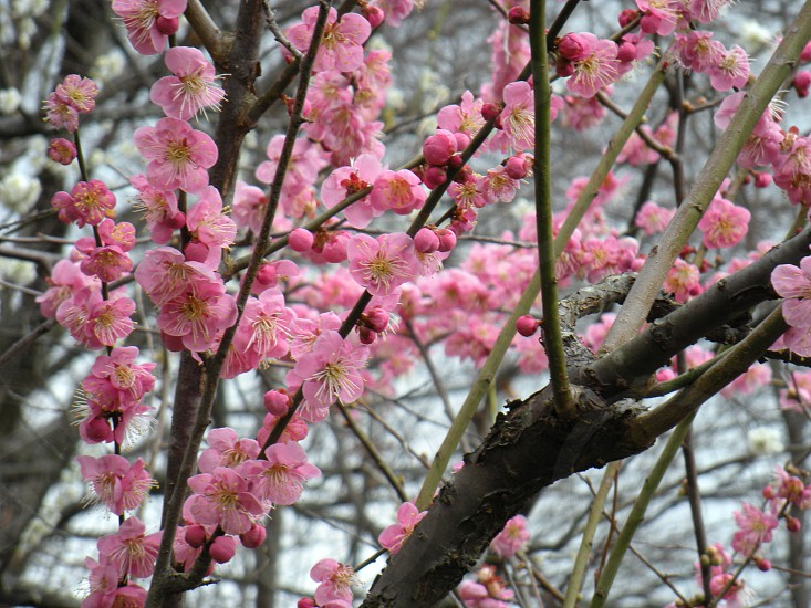 pink flowers on brown tree photo