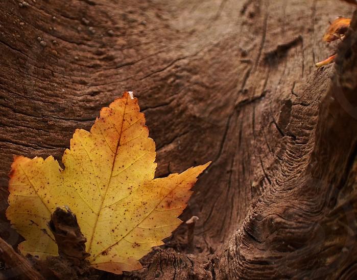 Backlit leaf in stump. photo