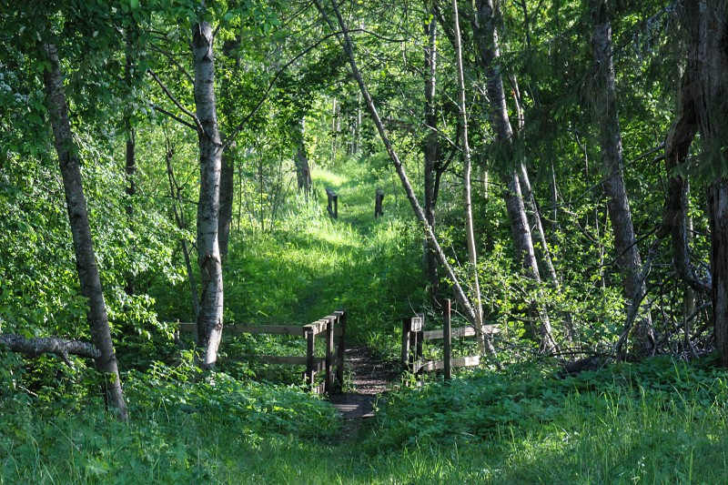 Small paths trough the forest in Langvindsbruk Sweden  photo