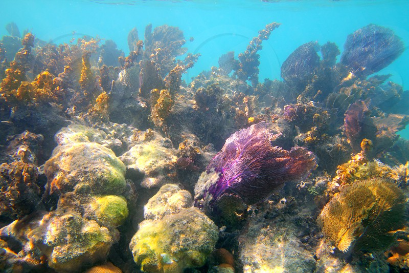 Caribbean tropical reef snorkeling in Mayan Riviera Mexico photo