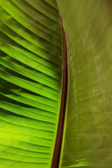 Plant leaf green  photo