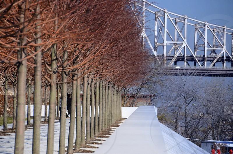 Brown Tree Brnaches with White Bridge photo
