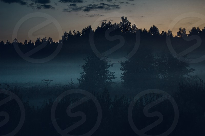 Evening fog in forest photo