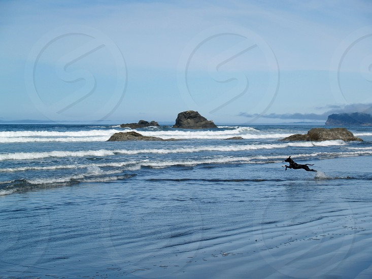 Washington coastline dog beach ocean waves action shot adventure explore photo