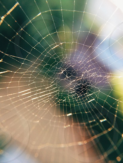 Spider web macro.  photo