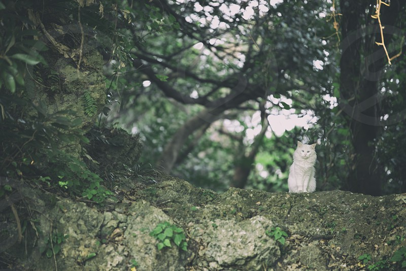 white long-hair cat sitting on gray rock by  green forest photo