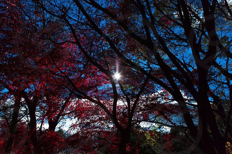 光を目指して。 photo