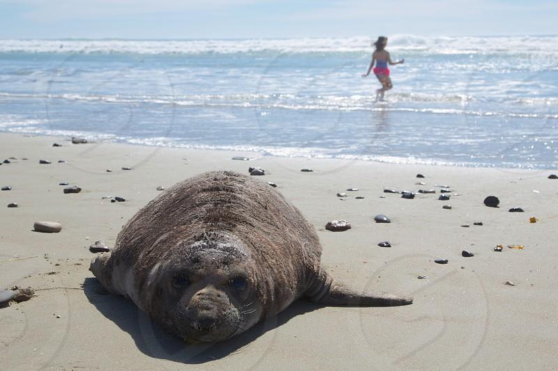 brown seal photo
