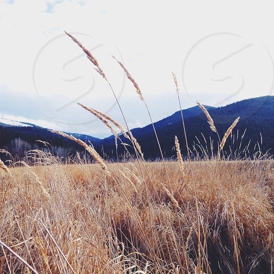 brown field view photo