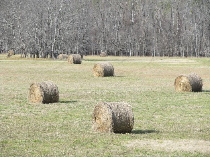Hay in a field photo