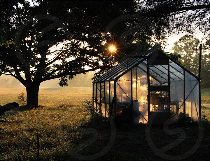 greenhouse near tree photo