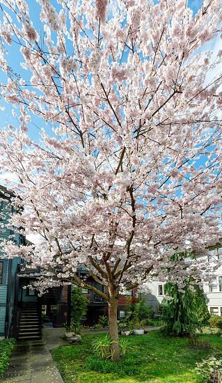 Spring 2 photo