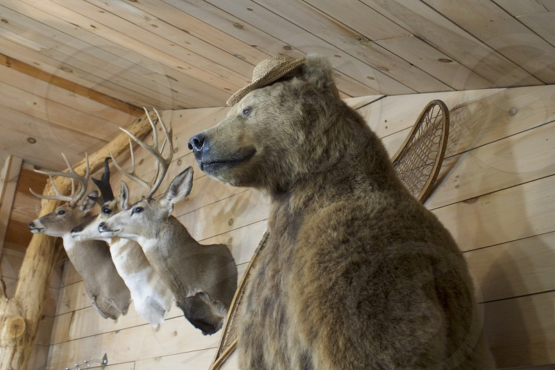 Cabin Life stuffed Grizzly Bear and Stags     photo