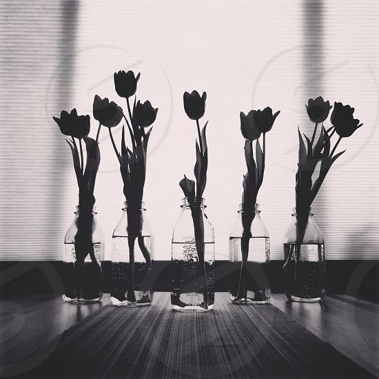 flowers silhouette photo