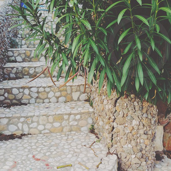green leaf plant beside gray and brown concrete stairs photo