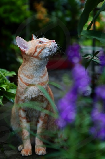 Adorable ginger cat in the garden photo