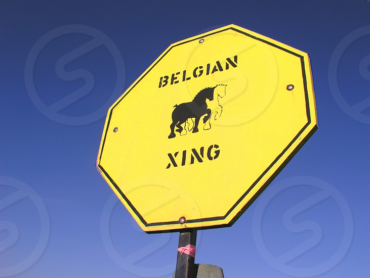 Belgian horse crossing sign photo