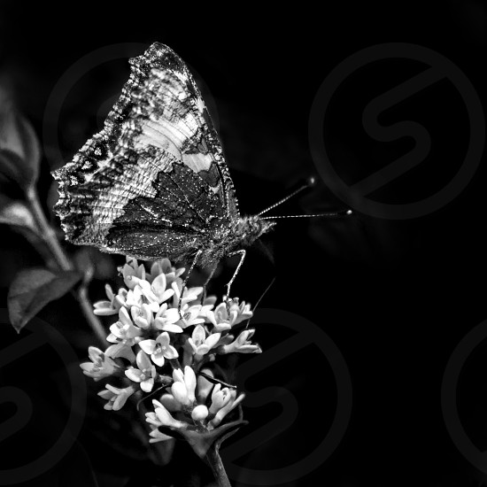 Black and white butterfly on sitting on a flower. photo