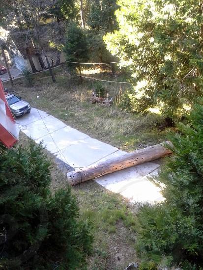 fallen tree blocked road log photo