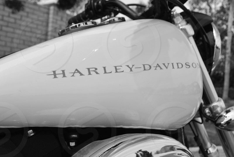 A simple clean black and white edit of the Harley-Davidson logo on the gas tank of a motorcycle.  photo