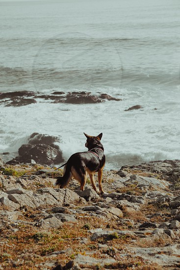 the dog photo