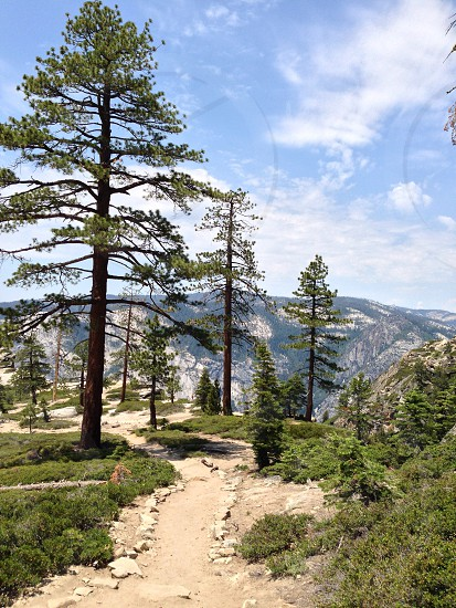 Yosemite national park forest park path road trail mountains photo