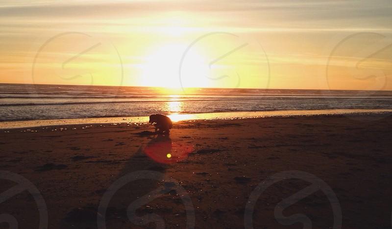 beach during sunset photo