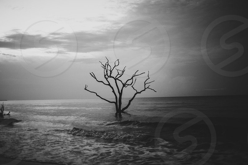 grayscale photography of skeleton tree on ripling body of water photo