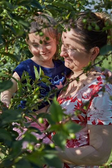 Mother showing her daughter cherries growing in a orchard photo