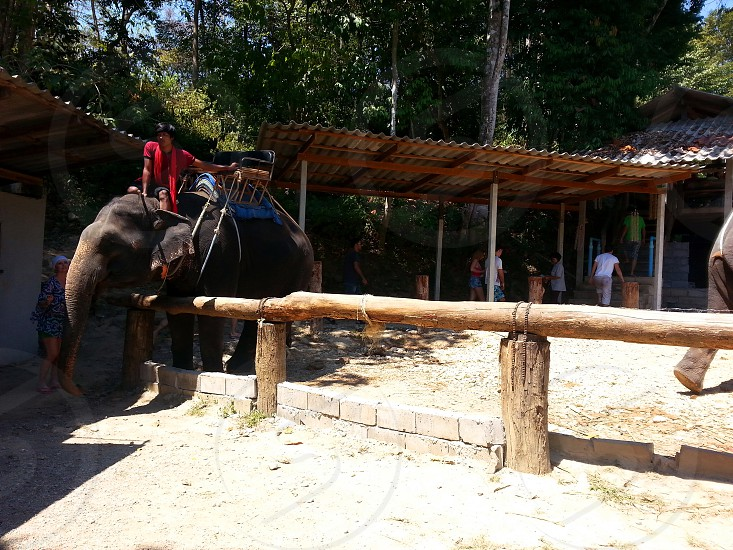 Elephant in front of brown wood log fence at the zoo photo
