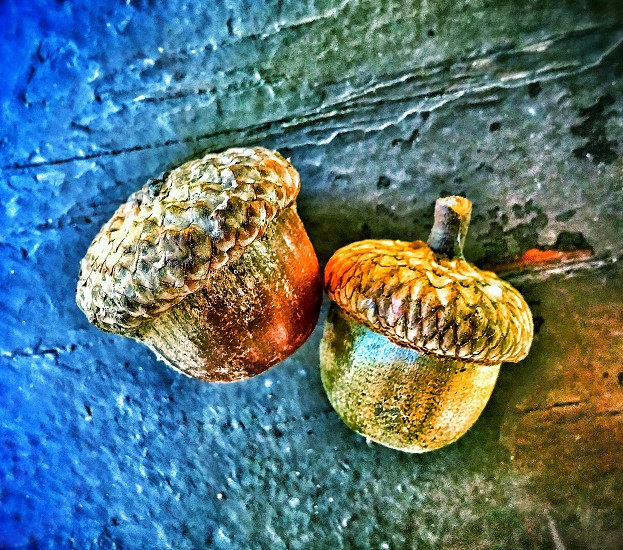 two of a kind #colorful #nature #nurture #acorns #falliscoming photo