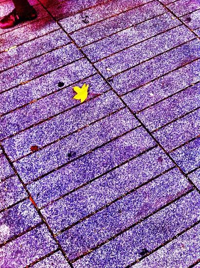otoño hoja amarillo photo
