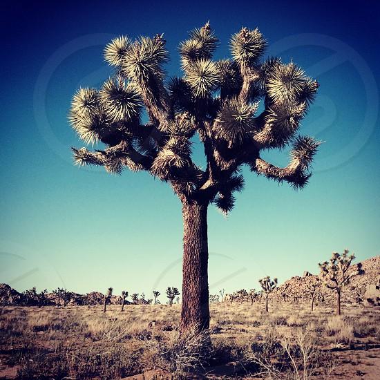 Joshua Tree National Park. photo