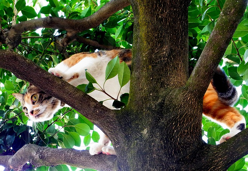 calico cat on tree screenshot photo