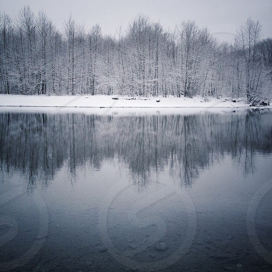 Trees and river in winter photo
